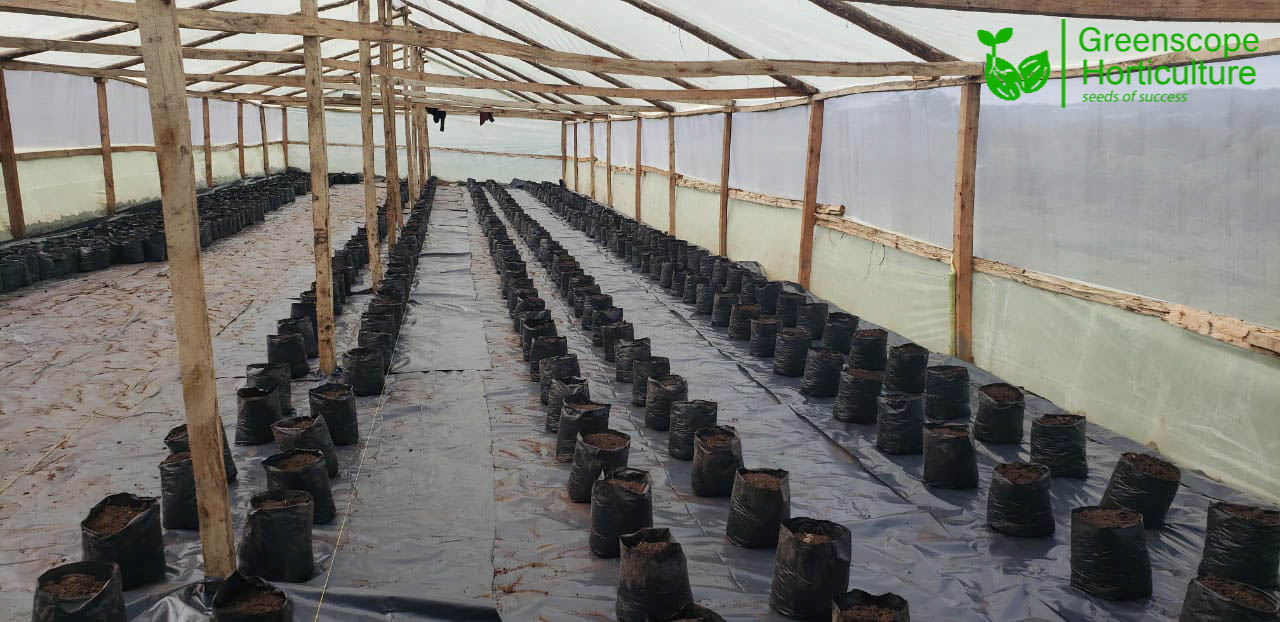 Wooden greenhouses in Kenya